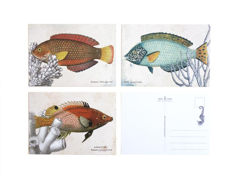 Postkarten_Fische